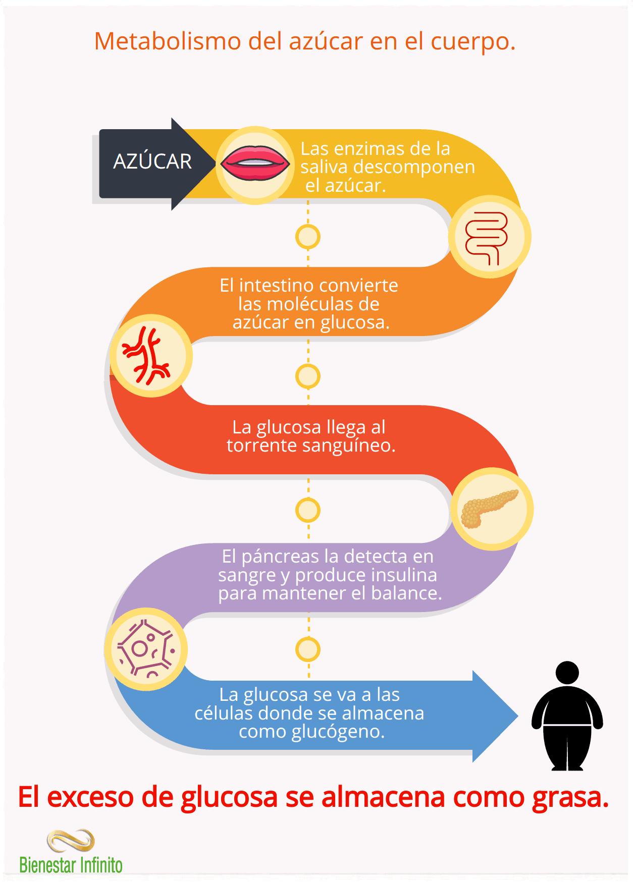 Metabolización del azúcar