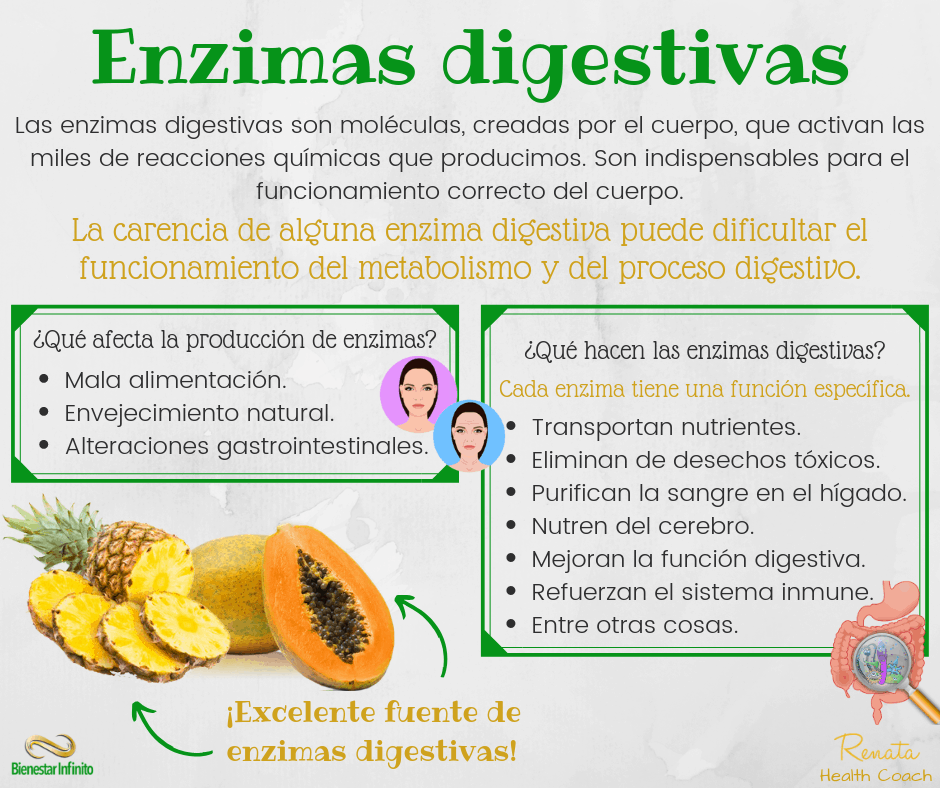 enzimas-digestivas